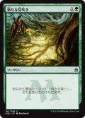 【Foil】(A25-UG)Rancor/怨恨(JP,EN)