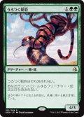 【Foil】(AKH-RG)Prowling Serpopard/うろつく蛇豹(JP,EN)