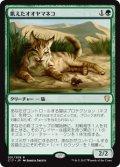 (C17-RG)Hungry Lynx/飢えたオオヤマネコ(日,JP)