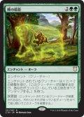 (C18-RG)Bear Umbra/熊の陰影(日,JP)