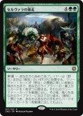 $FOIL$(CN2-RG)Selvala's Stampede/セルヴァラの暴走(JP,EN)