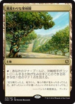 画像1: (CN2-RL)Exotic Orchard /風変わりな果樹園(JP,EN)