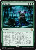 $FOIL$(EMN-RG)Eldritch Evolution/異界の進化(JP,EN)