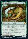 (STX-MG)Blex, Vexing Pest/厄介な害獣、ブレックス(英,EN)
