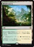 【Foil】(XLN-RA)Sunpetal Grove/陽花弁の木立ち(JP,EN)