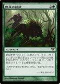 (AVR-R)Wild Defiance/野生の抵抗(英,EN)