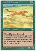 (PO3-UC)Hunting Cheetah/狩りをする豹(日,中,JP,CHI)