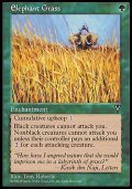 (VIS-U)Elephant Grass/エレファント・グラス(英,ENG)