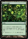 (WWK-C)Khalni Garden/カルニの庭(JP,EN)